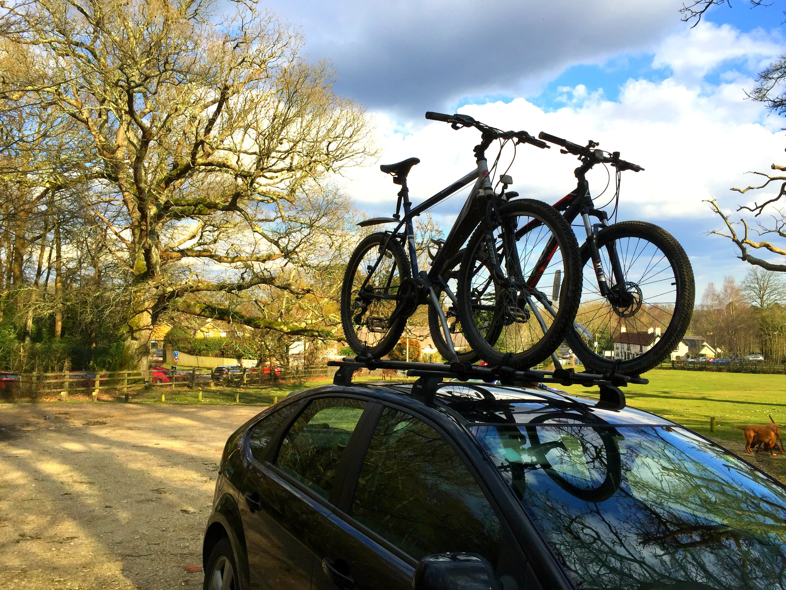 Microadventure: Cycling in The New Forest National Park